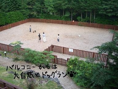 20090827CIMG4174.jpg