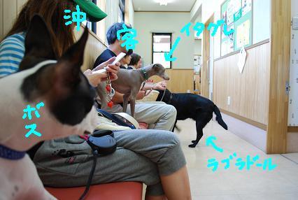 20090901DSC_0036.jpg