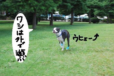 20090915DSC_0198.jpg