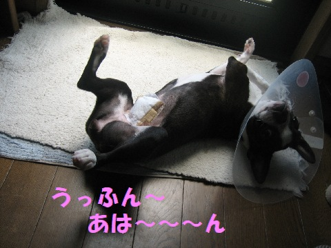 IMG_39<br /><br /><br /><br /><br />いつもありがとうございます<img src=