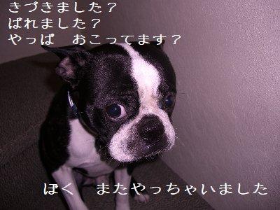 CIMG8855-.jpg