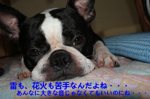 DSC00566r.jpg