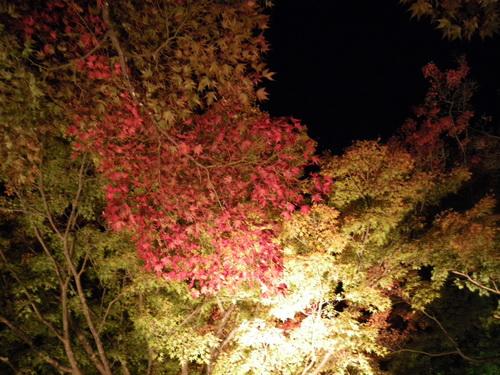 12_20101114122157.jpg