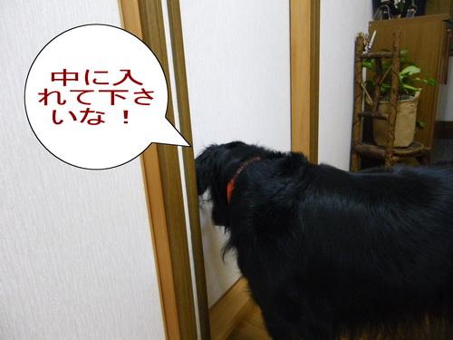1_20101217071320.jpg