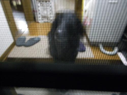 2_20101124181347.jpg