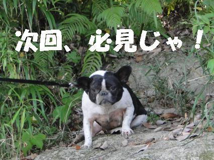 ぷっちヨーダ