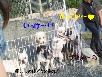 DSC01330-2.jpg