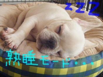 snap_buhipacino_2009742251.jpg