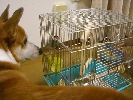 ぶん太と文鳥