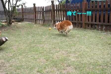 ボール投げ