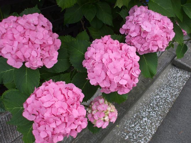 2009_07_13.jpg