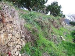 みかん園の石垣