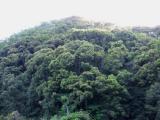 因島の新緑