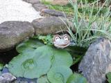 池の蛙は?