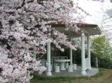 因島大浜崎灯台の桜