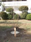 因島午未会記念樹