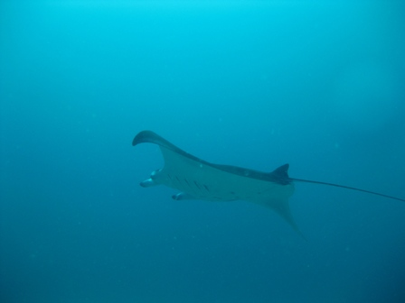 blog_mantaray150908.jpg