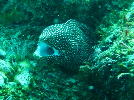 blog_whitemouthmoray100908.jpg
