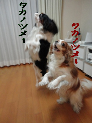 20101019.png