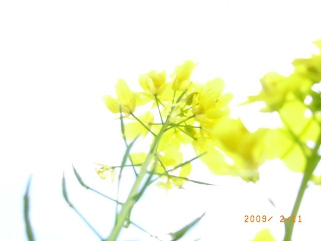 RIMG0468.jpg