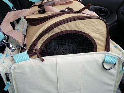 帰りは、キャリーバッグに入ったまま