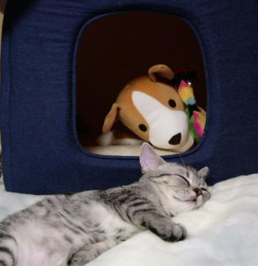 何で犬のぬいぐるみga中へ引きずり込んで、りぼんが外で寝るの?