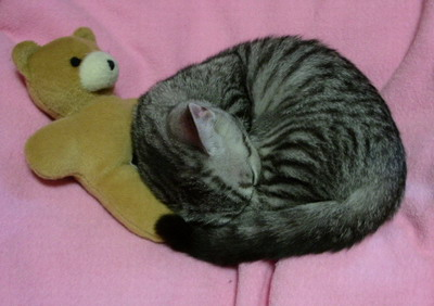 クマさんは、噛むだけでなく枕にもなります。