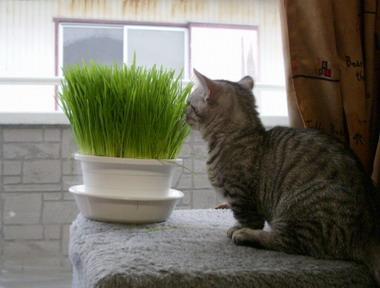 これ、なーに? ねこ草だよ。