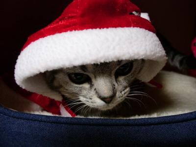 サンタクロースは、こんな赤い服着てるんだよ
