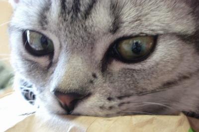 美猫っぽい目元のアップ