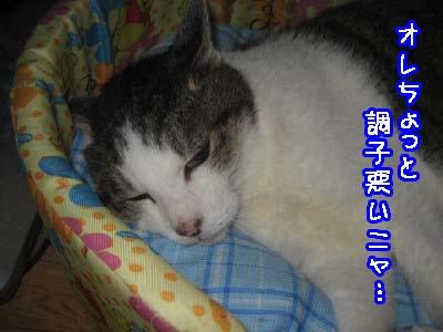 0-8_20080912221941.jpg