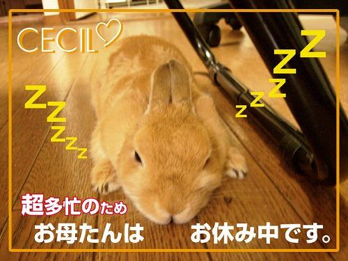 お休みしています。