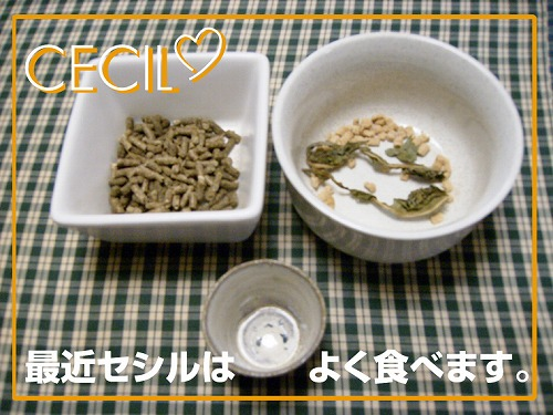 s-1ご飯
