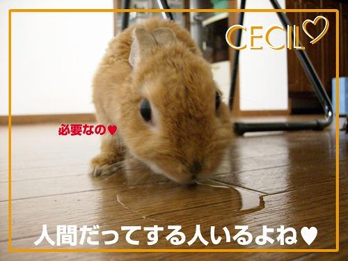 s-ちっこ3