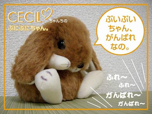s-ぷいぷいちゃん1
