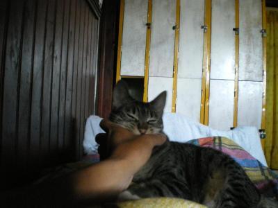 猫とじゃれる旅人