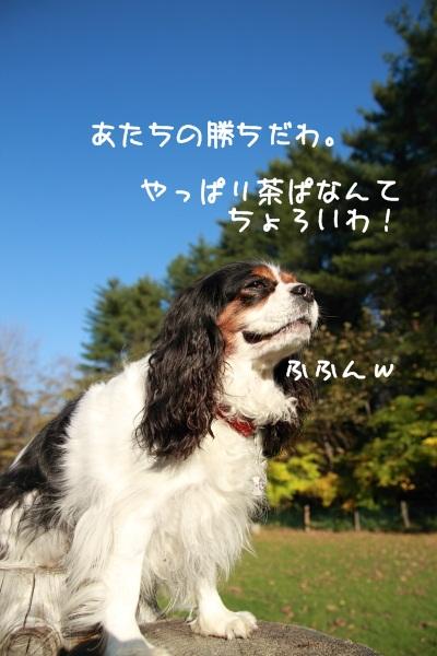 2010 10 24_5055