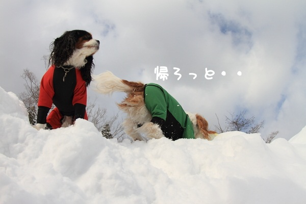 2011 02 20_5979