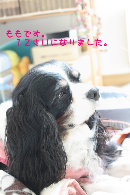 2011 04 10_6143