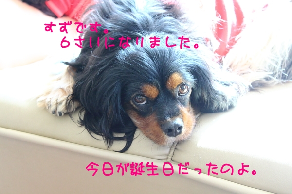 2011 04 10_6141