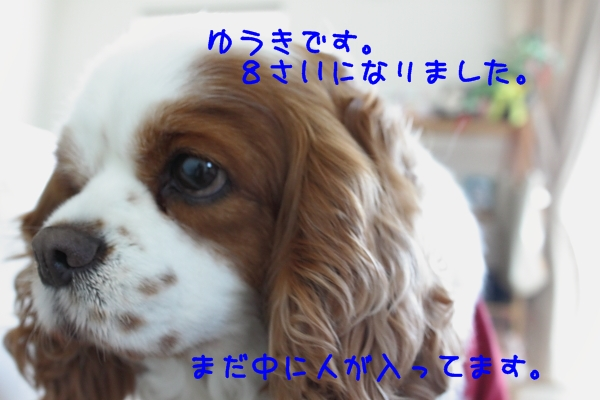 2011 04 10_6135