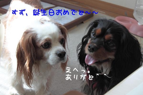 2011 04 10_6145