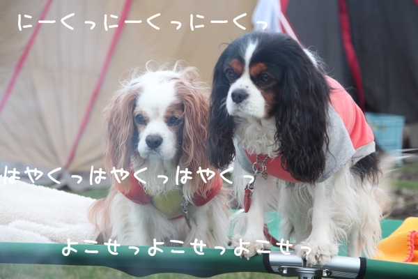 2011 05 01_6356