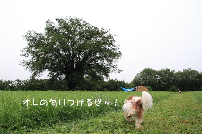 2011 07 18_7181