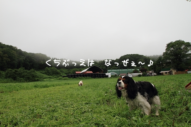 2011 07 18_7185
