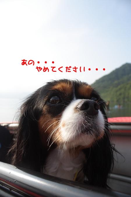 2011 08 07_7530