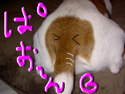 snap_chako95_2008125163114.jpg