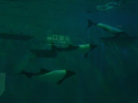 松島 仙台 109