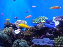 熱帯魚コーナー