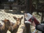 鹿とマリア